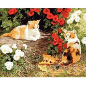 """Картина по номерам """"Два кота"""", размер 40*50 см"""
