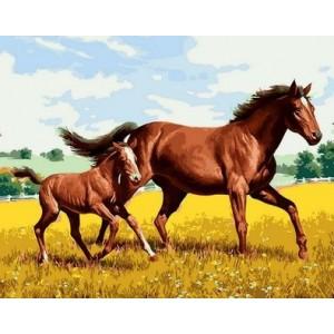 "Картина по номерам ""Два коня в поле"" размер 40*50 см"
