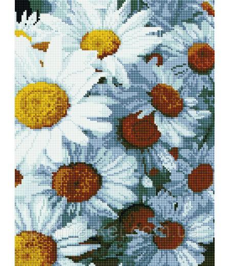 Алмазная мозаика 40х30 - Ромашки